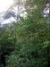 Hinter dem Zaun ein normaler, schöner Wald - auf den ersten Blick.