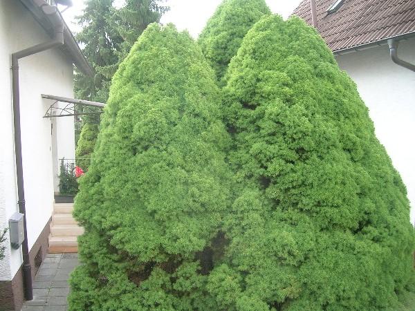 Ob Bäume, Wege oder Gartenteich - alles muss weichen.