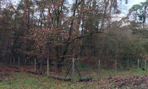 Blick auf den eingezäunten Roten Hof.